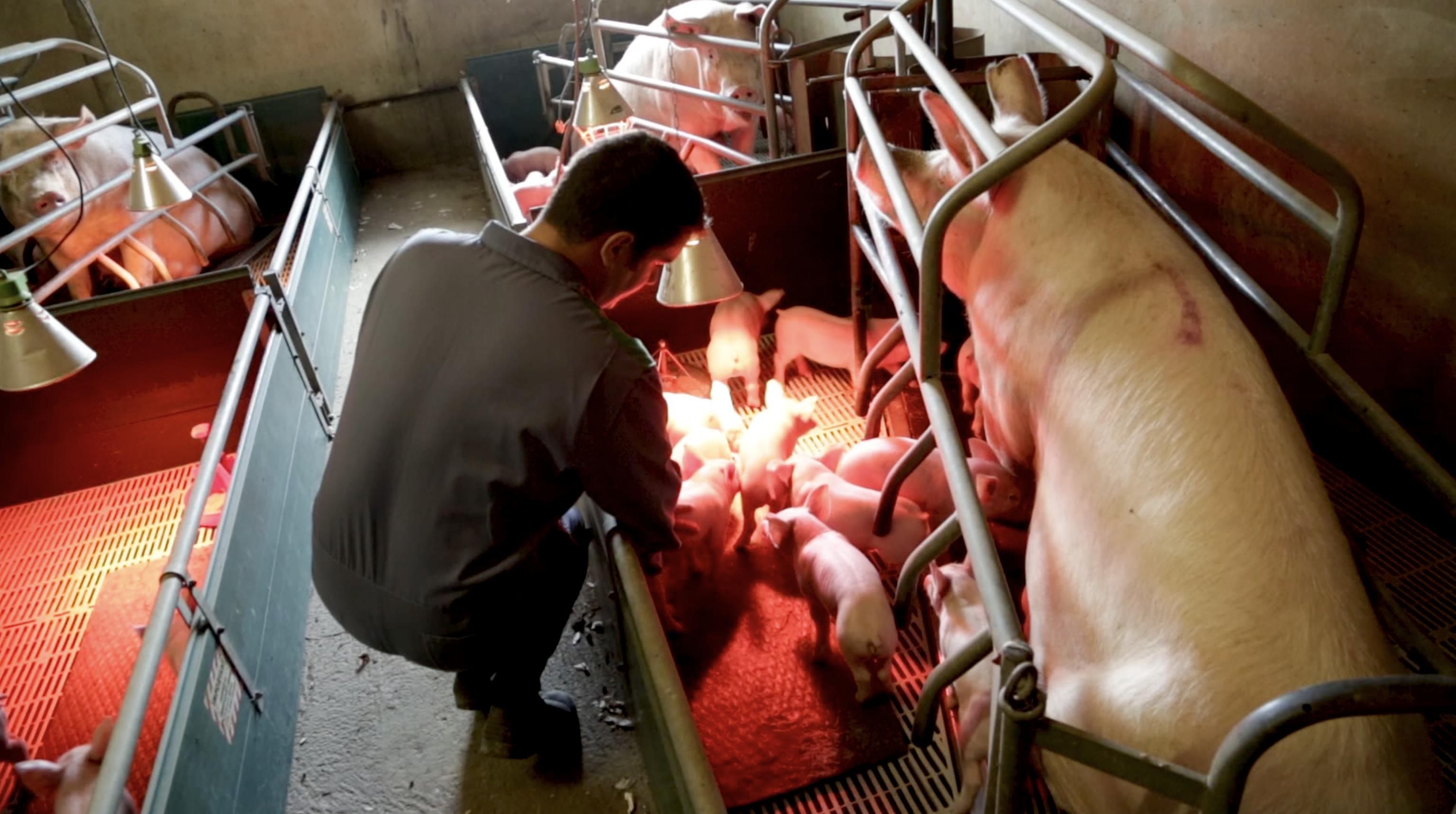 Gautier Moureu : la passion des bêtes