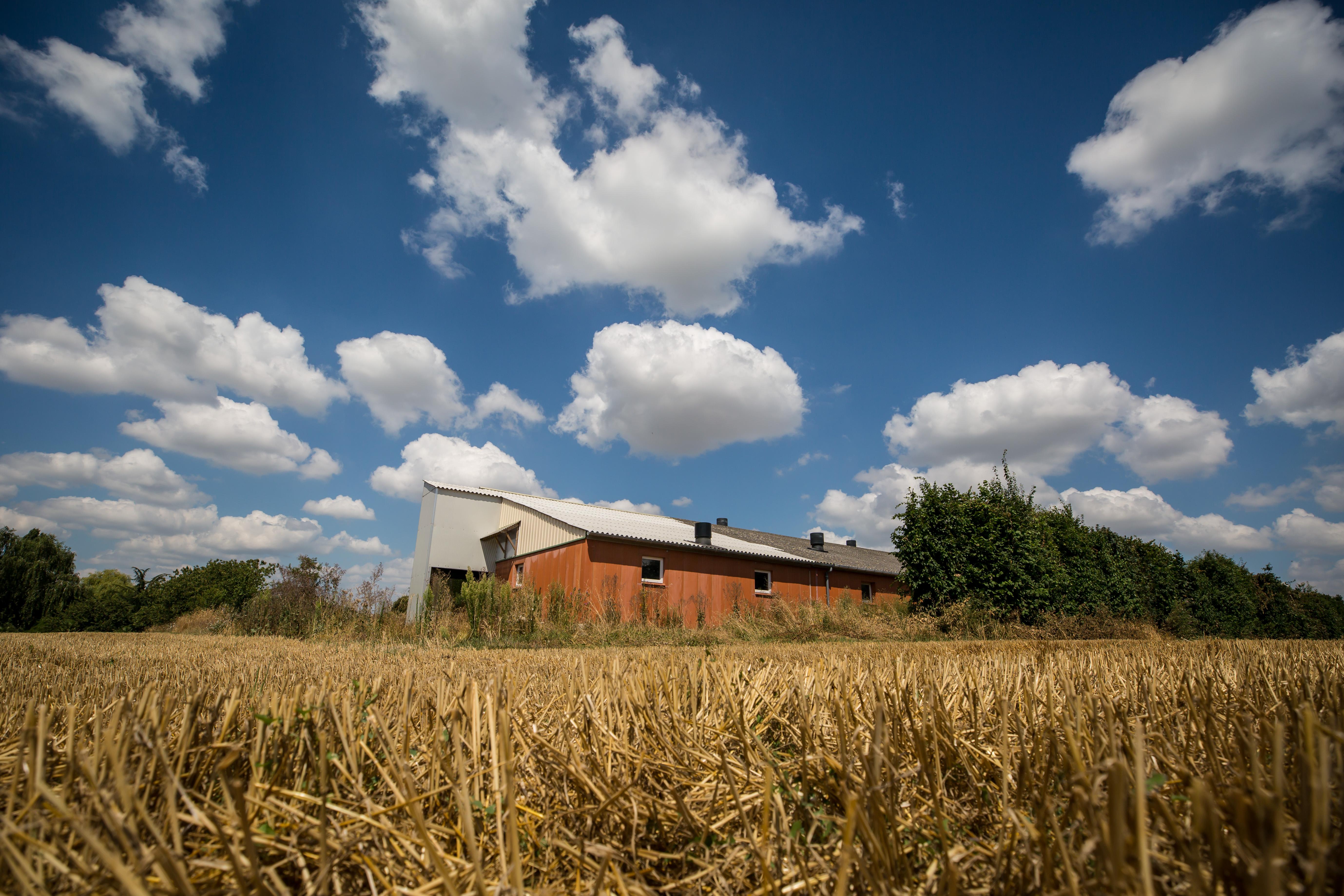 Les émissions du secteur agricole ont baissé selon le Haut Conseil pour le Climat