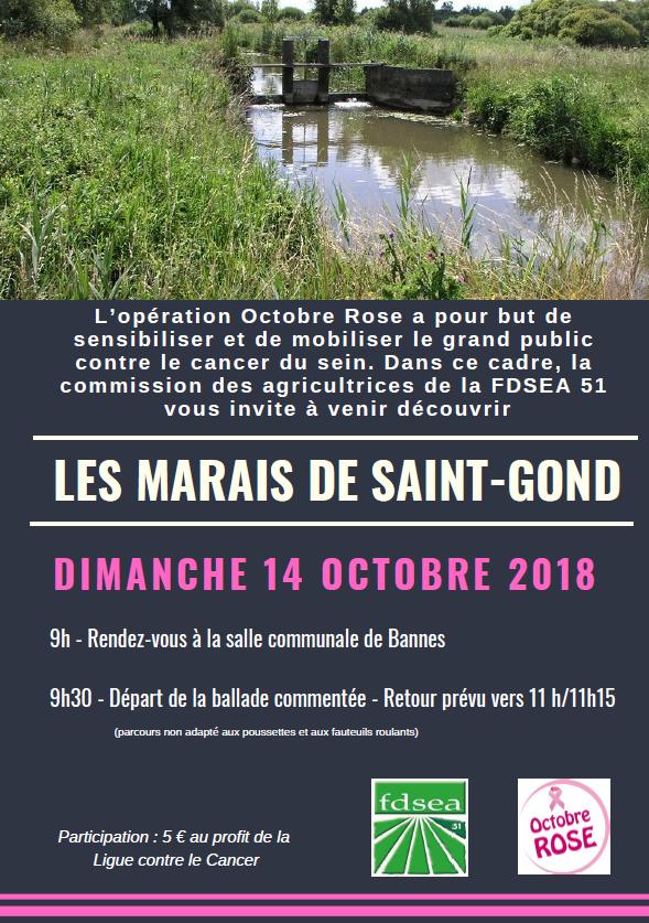 Les Marais de Saint-Gond
