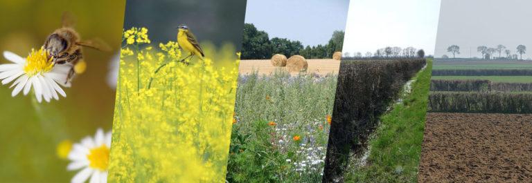 L'agriculture, facteur de Biodiversité