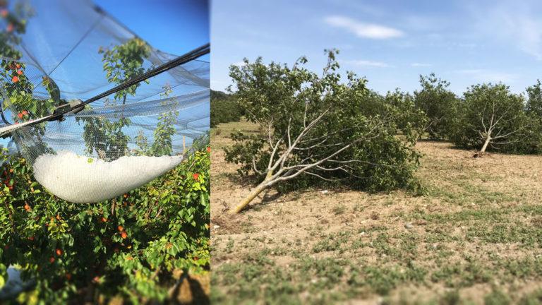 Intempéries : la FDSEA de la Drôme au chevet de ses agriculteurs