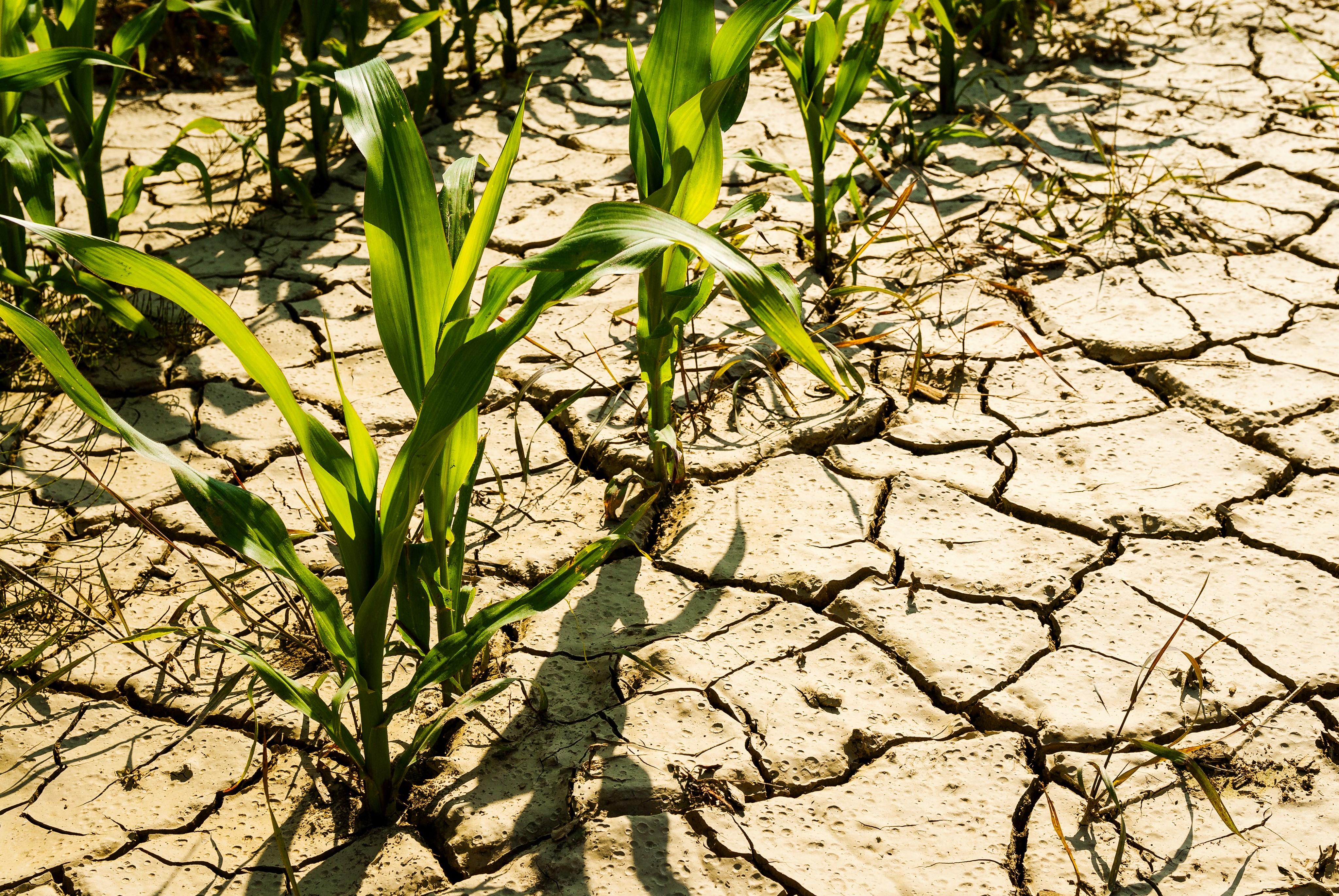 Sécheresse : le secteur agricole se mobilise !