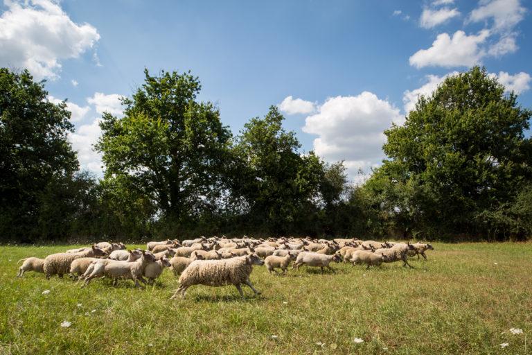 Les professionnels de l'élevage pleinement engagés en faveur du bien-être animal